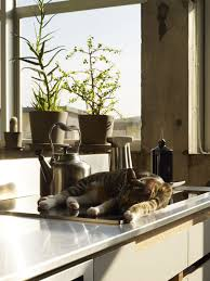 kitchen cabinets oakland kitchen cat window at sink off center to kitchen sink window
