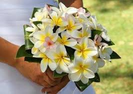 Plumerias Handheld Plumeria Wedding Bouquet