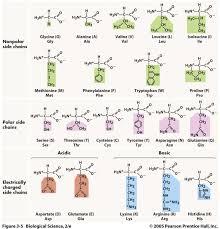 three acronym mnemonics for remembering the amino acids u2013 mindful