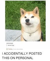Doge Girl Meme - absolutedoge talented doge trending source absolutedoge i