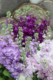 Spring Flower Pictures Best 25 Stock Flower Ideas On Pinterest Stock Wedding Flower