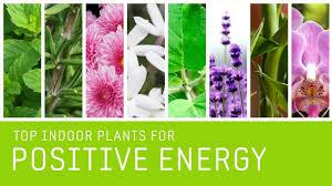 best indoor plants for positive energy fresh air fresh
