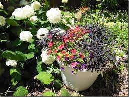 Soil Mix For Container Gardening - secret recipe for drought tolerant container garden soil mix