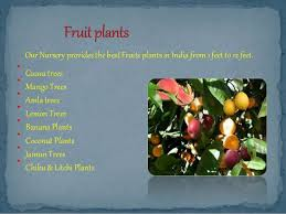 fruit flower ornamental trees manufacturers and suppliers
