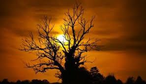 yew tree spiritual meaning thrive on spiritual magazine