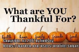 orchids forum happy thanksgiving everyone garden org
