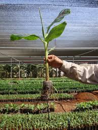 Fiber Soil by Coco Peat Coconut Fiber Plug Soil Blocks 7c Jiffy