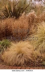 ornamental grass rhs wisley stock photos ornamental grass rhs