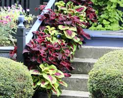 Potted Plants For Patio Containerscaping Take Your Potted Plants To A New Level Garden