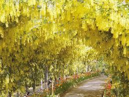 Dream Destination Ashikaga Flower Park Tochigi Matcha Japan
