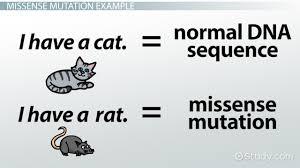 missense mutation definition u0026 example video u0026 lesson