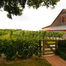 Backyard Vineyard Design by The 10 Best Wineries In New Zealand Gear Patrol