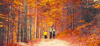 how to explain why leaves change color in the fall fatherly