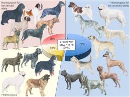 plos genetics analysis of large versus small dogs reveals three