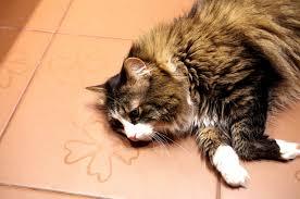 i found my cat lying on the bathroom floor she must be enjoying