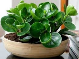 10 best indoor plants images on pinterest flowers for funeral
