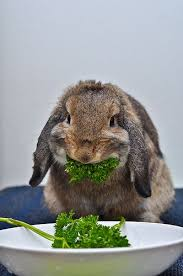 150 best rabbits images on pinterest bunnies jingle bells and