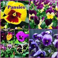 Lafayette Florist 14 Best List Of Plants For Amanda U0027s New Flower Beds Images On