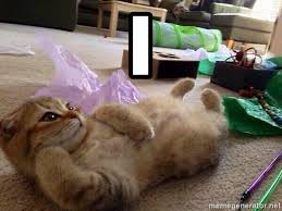 i the sexy cat aa meme generator