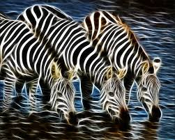 safari art an ideal gi zebra trio