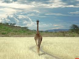 africa live images hd wallpapers b scb wp u0026bg collection