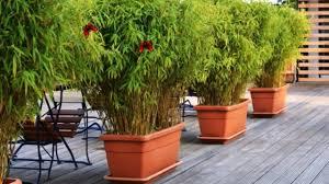 sichtblende balkon balkon sichtschutz bambus