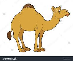 cartoon animal camel flat coloring style stock illustration