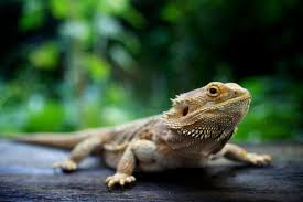 top 5 exotic pets for kids