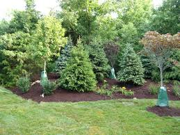 landscaping with grass trees adorable landscaping trees and