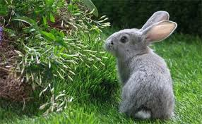 rabbit garden how to rid rabbits from your garden
