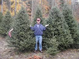 9 foot christmas tree canaan fir christmas tree christmas lights decoration