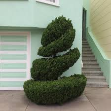 Lollipop Topiary The Dr Seuss Like Topiaries Of San Francisco Photographed By