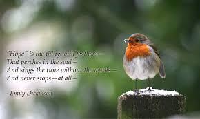 image of a bird symbolizing hope