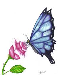 butterfly drawings in color butterfly rose by evolra traditional