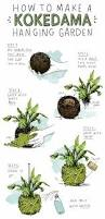 how to make kokedama small space hanging gardens apartment