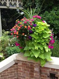 98 best container gardening images on pinterest pots gardening