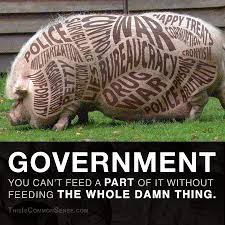 Armadillo Meme - government common sense with paul jacob