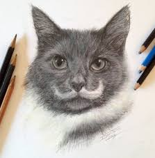 pencil drawing of a cat drawing a realistic baby kitten cute cat