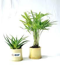 plante de bureau plantes de bureau sans soleil educareindia info