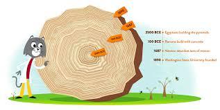 ask dr universe how long can trees live wsu news washington
