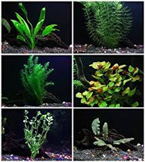 How To Aquascape A Planted Tank Amazon Com Caribsea Eco Complete 20 Pound Planted Aquarium
