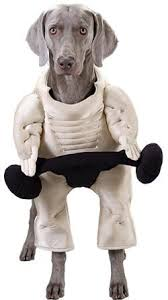 Halloween Costume Large Dogs Pet Muscle Dog Halloween Costume Size Large Pet Advertisings