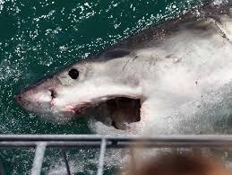 the best way to escape a shark when you u0027re u002747 meters down u0027 inverse