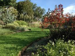 Melb Botanical Gardens by Native Kangaroo Paws Anigozanthos At The Melbourne Botanic