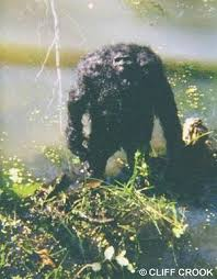 bigfoot neanthral yeti ancient races the real origin of