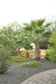 az landscape creations landscaping design bobcat service in