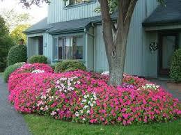 best 25 front yard flowers ideas on pinterest front yard plants