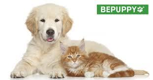 Come Costruire Una Casetta Per Conigli by Bepuppy U2022 Pet Blog Cani Gatti E Altri Animali Domestici