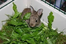 cuisiner un lapin de garenne bébé lapin de garenne supertoinette