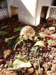 doug u0027s little turtle